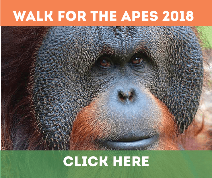 Walk for Apes
