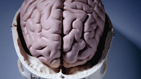 D 470x264 - Las épocas difíciles pueden acelerar el envejecimiento del cerebro