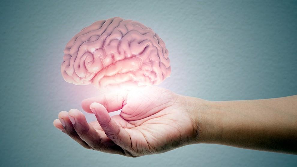 brain in hand - Daniella Levine Cava continúa apoyando a la comunidad