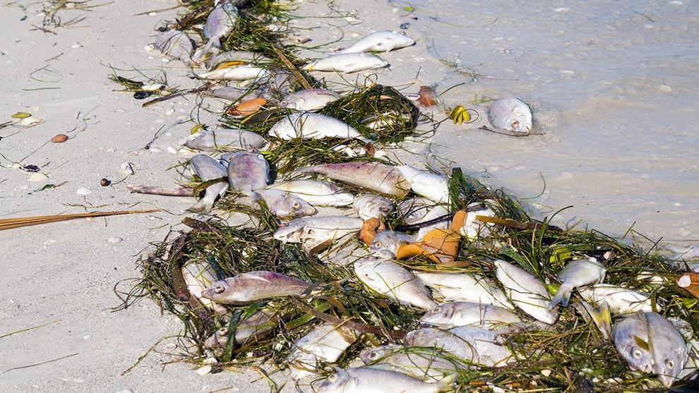 dead fish miami - Daniella Levine Cava continúa apoyando a la comunidad