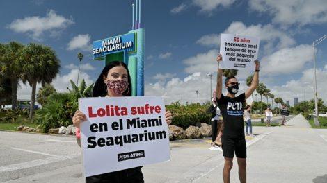 Free Lolita protest