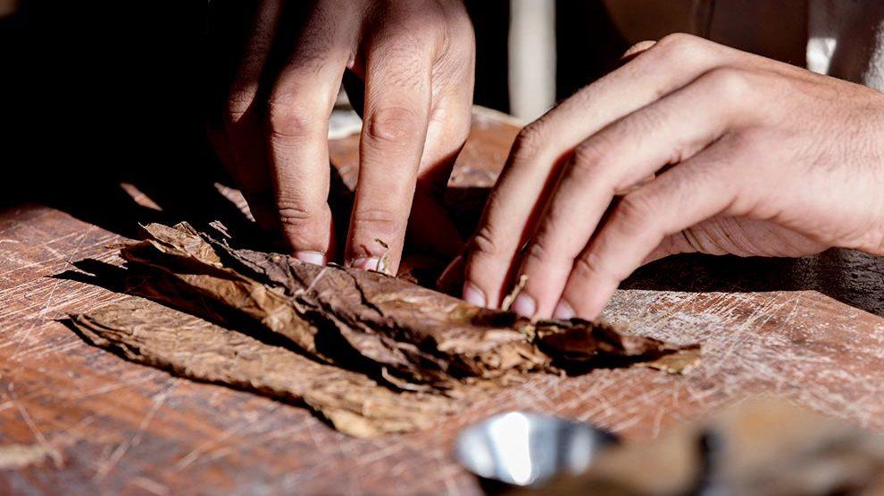 Cuban cigars making