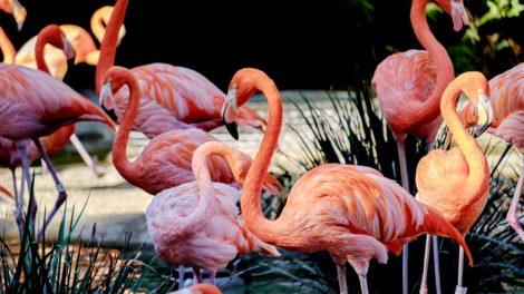 Flamingos on Jungle Island