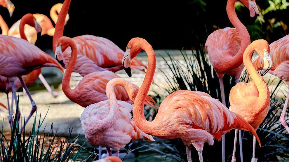 Flamingos on Jungle Island