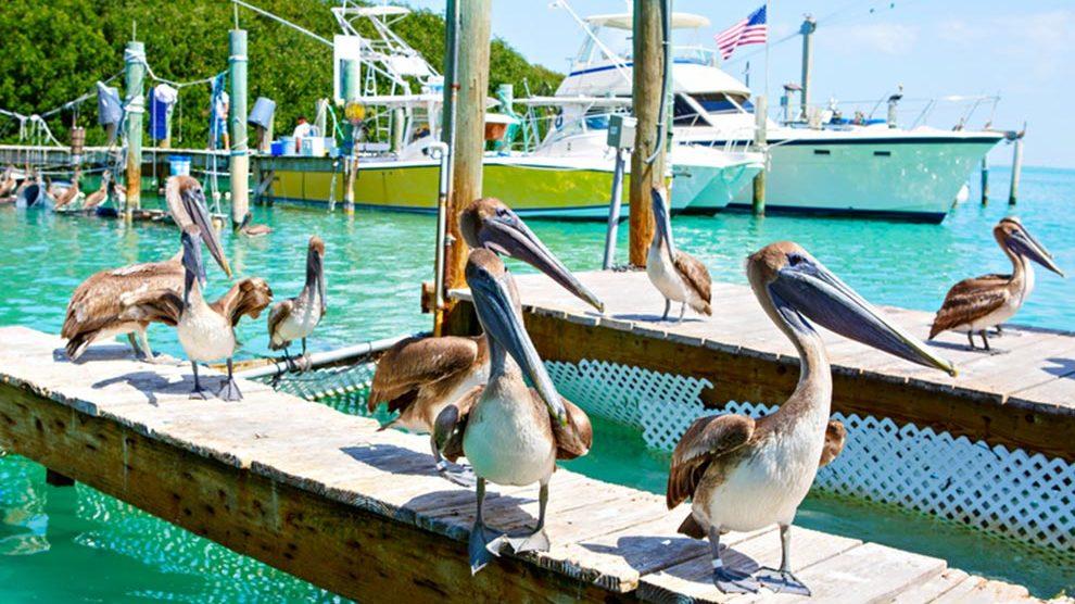 Summertime Activities in Miami
