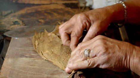 Making a Cuban Cigar